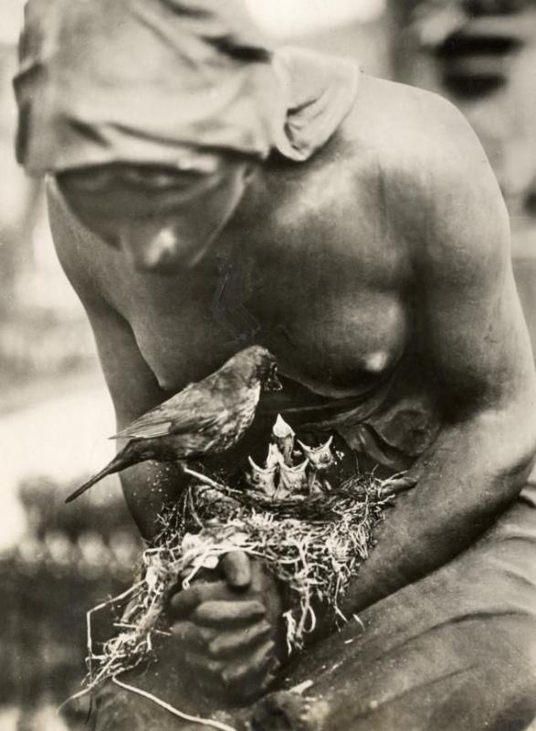 Гнездо дрозда, свитое в сложенных руках статуи на кладбище в Берлине, Германия, 1932 год
