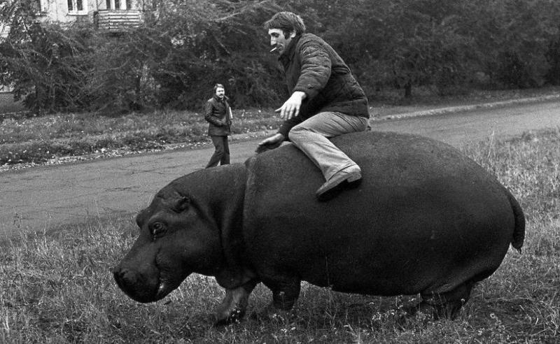 Родео с бегемотом, 1982