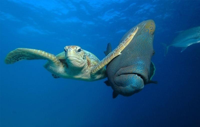 Cамые смешные фотографию мира животных