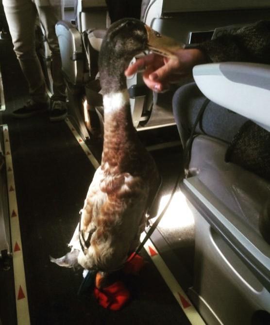 15 фото пассажиров, лететь рядом с которыми — настоящий кошмар!