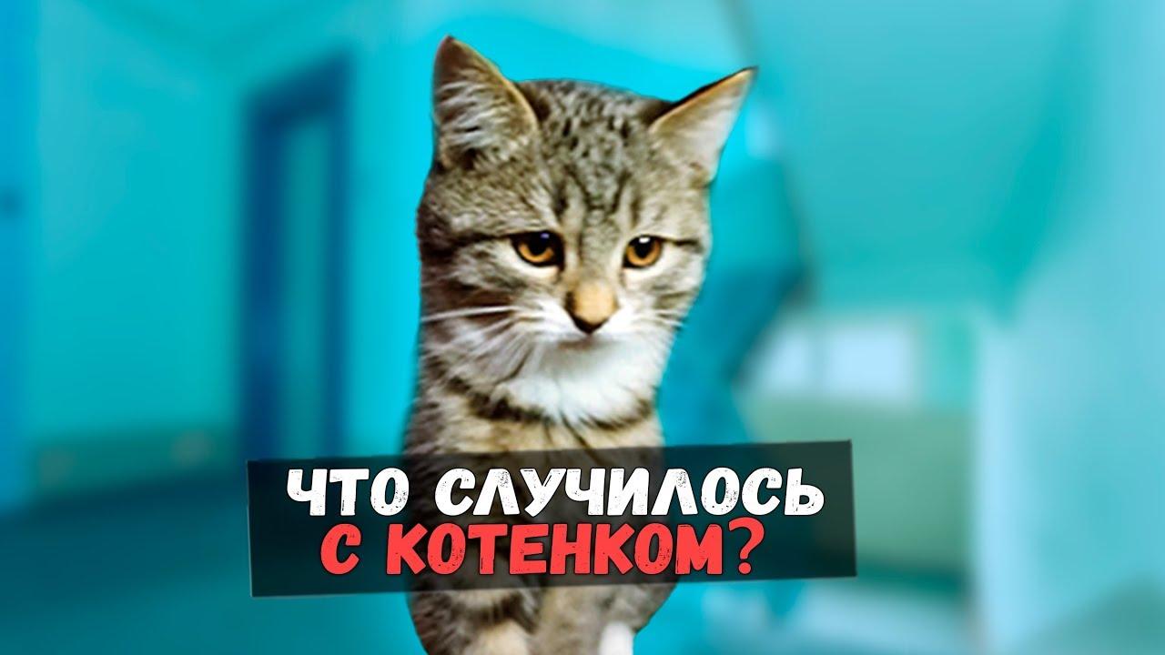 Спасение котенка. Грустная история со счастливым концом / SANI vlog