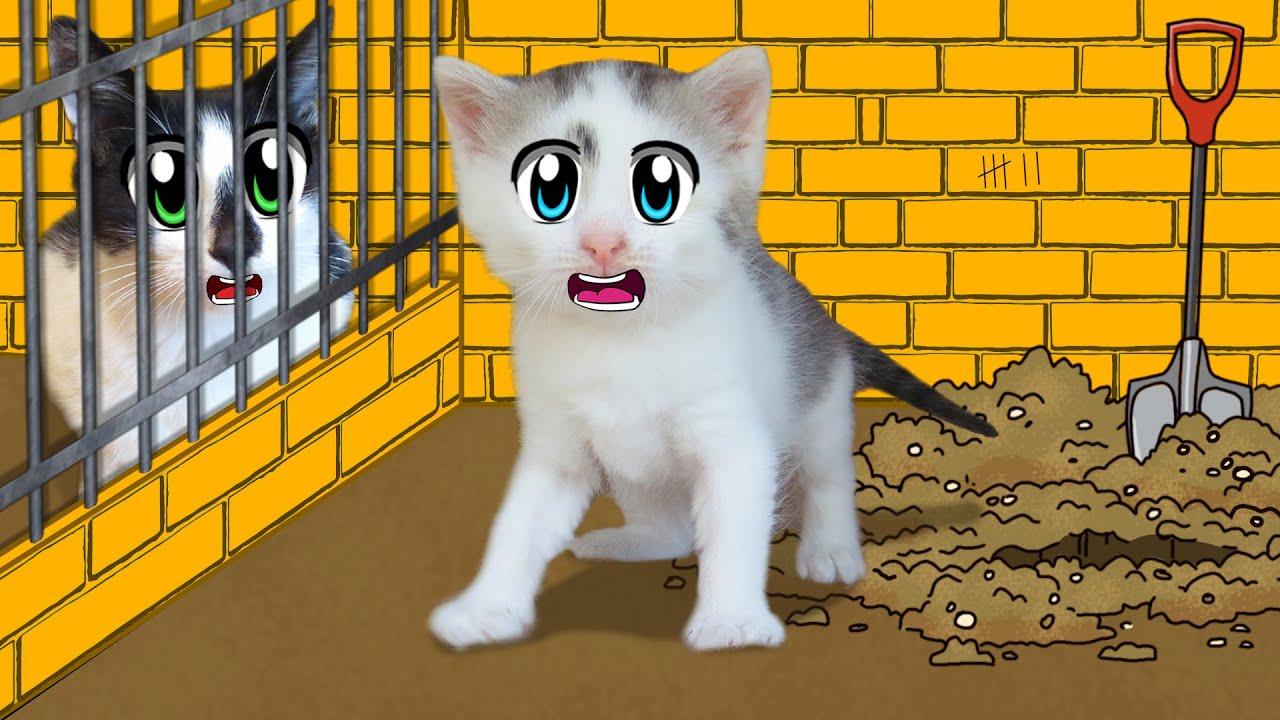 ПОБЕГ ИЗ ТЮРЬМЫ ЧЕЛЛЕНДЖ! КТО ПОСЛЕДНИЙ покинет ТЮРЬМУ кот МАЛЫШ или Кошка МУРКА?