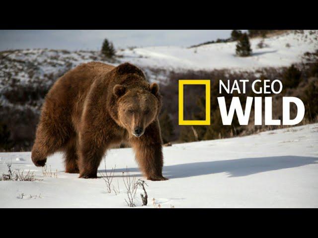 Nat Geo Wild: Дикая природа России Wildlife in Russia   National Geographic 4K Ultra HD