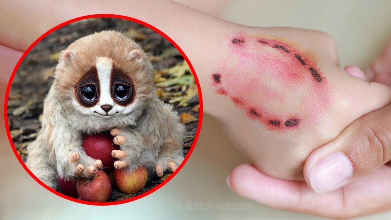 10 Милых Животных, Которые На Самом Деле Смертельно Опасны!