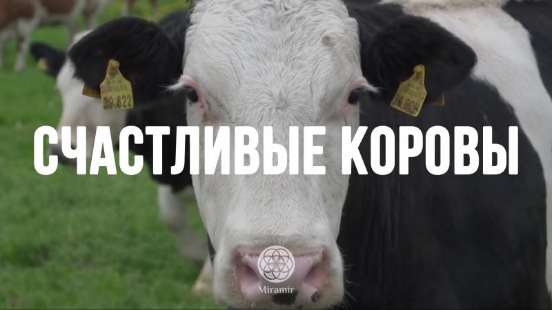 Коровы, спасенные с бойни, впервые попали на свободу